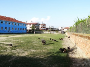 The boys playing Frisbee in the school yard. Turkeys and chickens included.