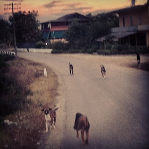 My running companions! Six dogs in all. Quite the morning run.
